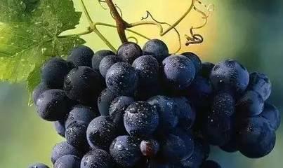 白斑能吃水果吗,白癜风能吃些什么水果呢